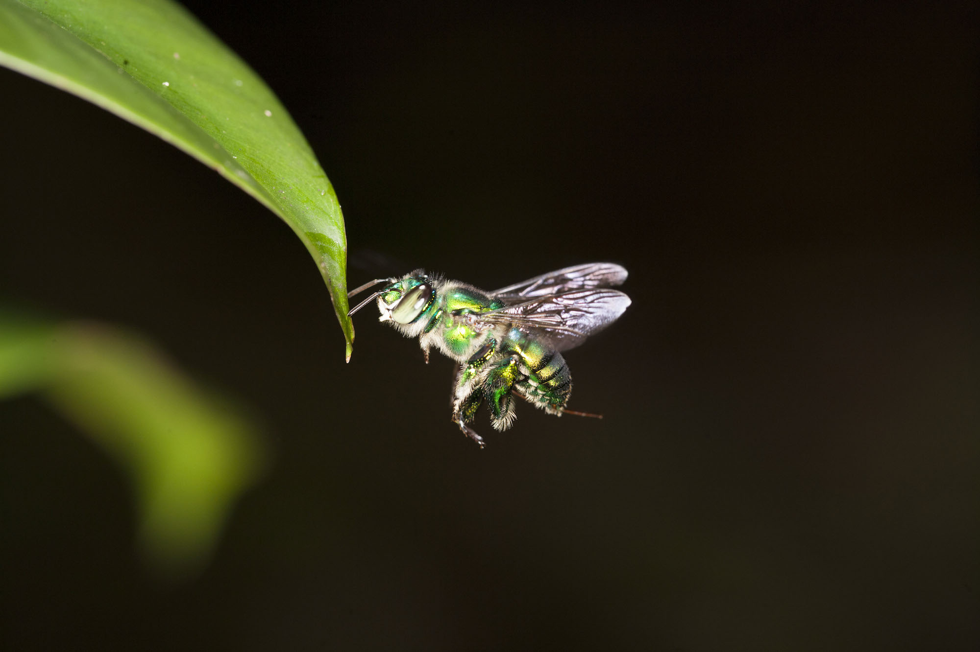Insect Eyes Enable Drones to Fly Independently - R&D - Maintworld
